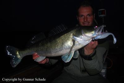 Schöner 81cm Zander! Das Wasser wird langsam klarer und das bedeutet, es beißt auch wieder nachts!